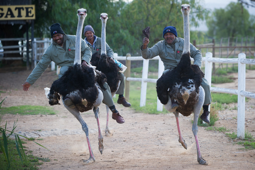 Oudtshoorn, Highgate Ostrich Show Farm